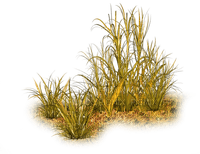 gräs---grass