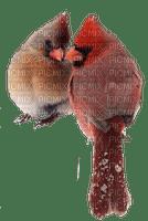 Oiseau.Birds.Cardinal.Winter.Hiver.Victoriabea