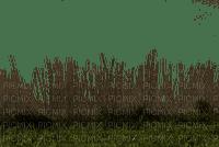 grASs border herbe