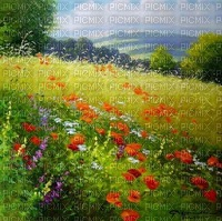 loly33 paysage coquelicot