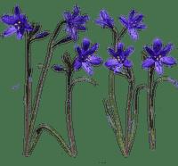 Fleurs.Flowers.Violet.Spring.Victoriabea