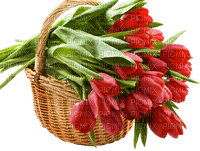 basket red tulips panier fleur rouge
