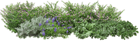 spring printemps frühling primavera весна wiosna tube deco flower fleur blossom bloom blüte fleurs blumen  garden jardin lit bed beet