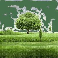 field feld terrain tree baum arbre grass race garden  summer ete paysage landscape fond background  tube