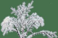 Plants.plante.winter.snow.Victoriabea
