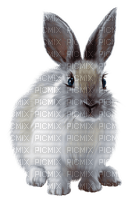 kanin-djur---rabbit- animal