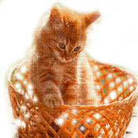 RED BABY CAT IN BASKET bebe chat rouge paNier