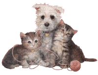 dog and cats chats chien