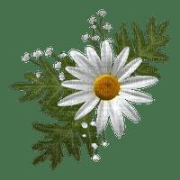 daisy flowers  marguerite fleurs printemps