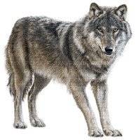 patricia87 loup