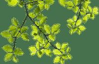 tree,leaf