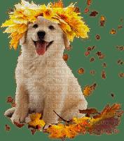 jesienny piesek