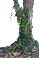arbre tree