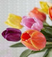 image encre bon anniversaire couleur fleurs tulipes mariage effet  edited by me
