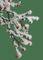 chantalmi branche hiver winter neige snow