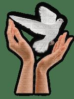 hands, kädet, kyyhky, dove