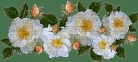 kukka, flower, fleur, ruusu, roses