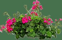 Plants.Fleurs.Garden.Flowers.Victoriabea