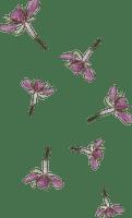 lila-flower-flowers--blommor-blomma