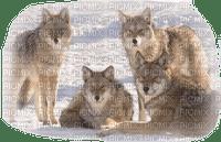Wölfe, loups, wolves