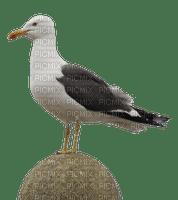 sea bird mer meer seagull mouette