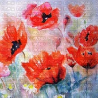 loly33 FOND COQUELICOT
