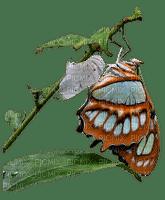 spring printemps frühling primavera весна wiosna branch zweig papillon butterfly schmetterling insect garden jardin tube deco