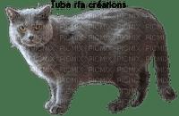 rfa créations - chat de race Chartreux