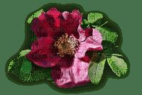 fleur,flower