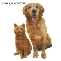 rfa créations -  chien et chat