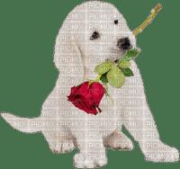 Piesek Róża