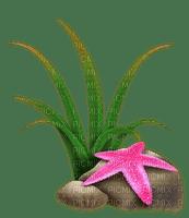 stone beach starfish plant