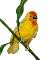 Kaz_Creations Bird On Branch