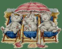 cat chat katze animal beach