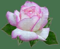 kukka, fleur, flower, rose, ruusu