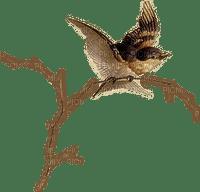 Bird.Oiseau.Pájaro.Branche.Victoriabea