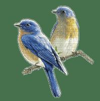 chantalmi   oiseau bird bleu blue