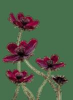 fleur violette.Cheyenne63