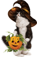 chat automne sorciere cat  autumn witch