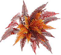autumn orange plants, bush, sunshine3