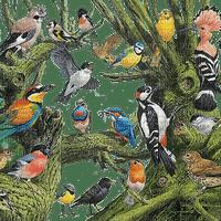 birds forest tree