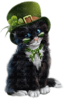 st patrick day cat chat
