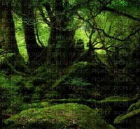 jungle paysage