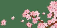 Sakura fleur rose pink flower nature
