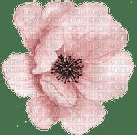 Pink flower  Bb2