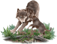 wolf with cub bp