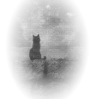 chat nuit night cat