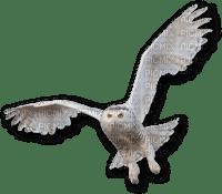 white owl hibou blanc