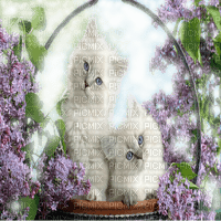white cat basket lilac flowers blanc Chats lilas fleurs