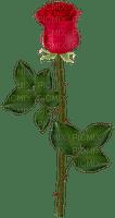 red rose,fleur, deko, Orabel
